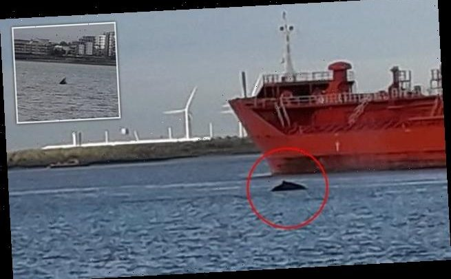 Whale spotted in the River Thames