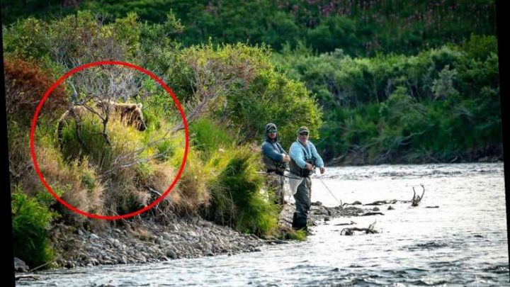 Terrifying moment massive grizzly bear creeps up behind two men fishing who are oblivious to danger lurking just yards away