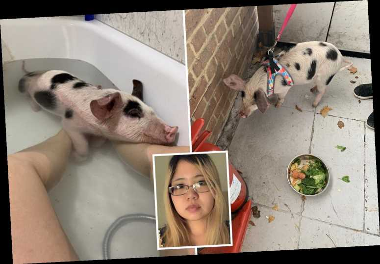 Vegan, 31, rescued pig 'Jixy Pixy' and took it to Wagamama, in £400 taxi rides and bathed with it – The Sun