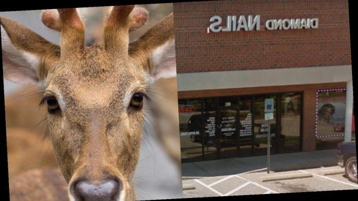 Deer butchered inside nail salon stuns North Carolina college student