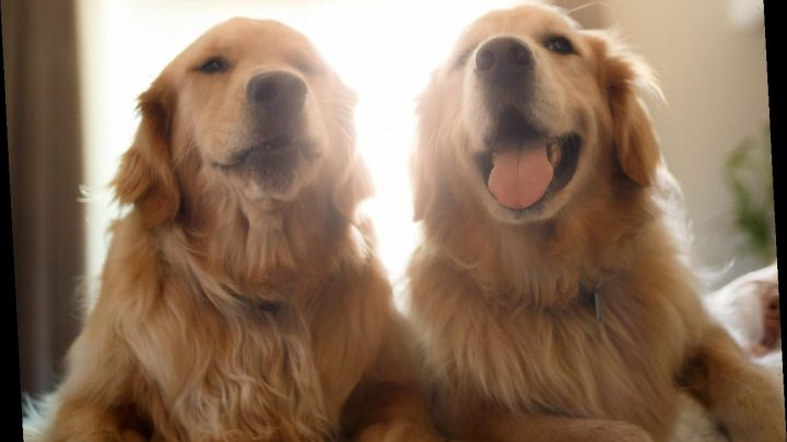 London couple place ad for full-time 'dog carer,' actually want live-in butler