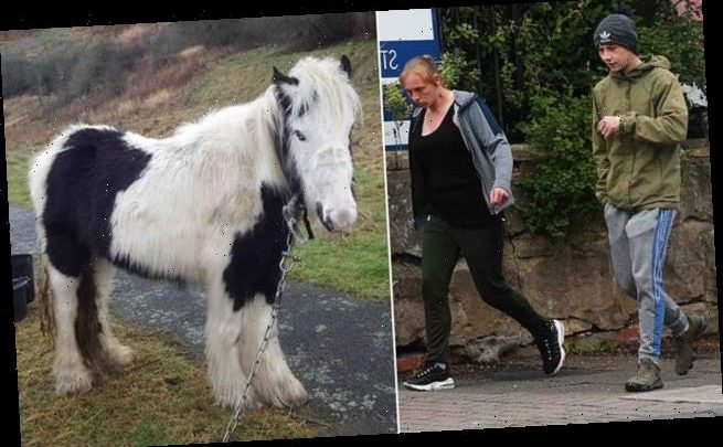 Mother, 37, and son, 18, are banned from keeping horses over cruelty