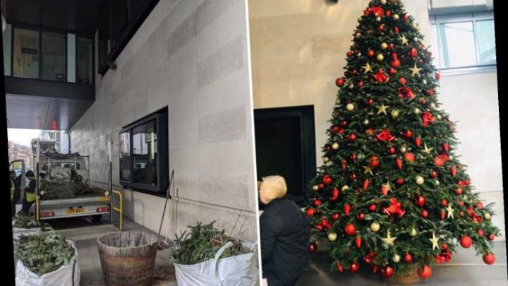 BBC bosses ordered to chop up their Christmas tree by health and safety chiefs just hours after it was put up – The Sun