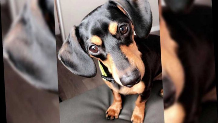 Utah family devastated after vet euthanizes wrong dog