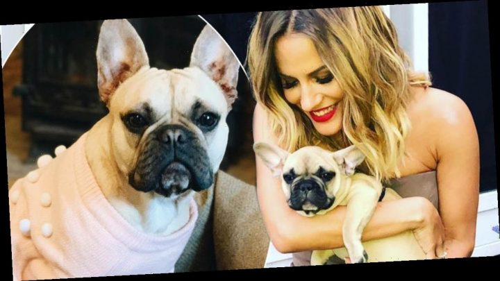 Caroline Flack's dog staying in £80 a day luxury hotel as she jets off to LA to 'clear her head'
