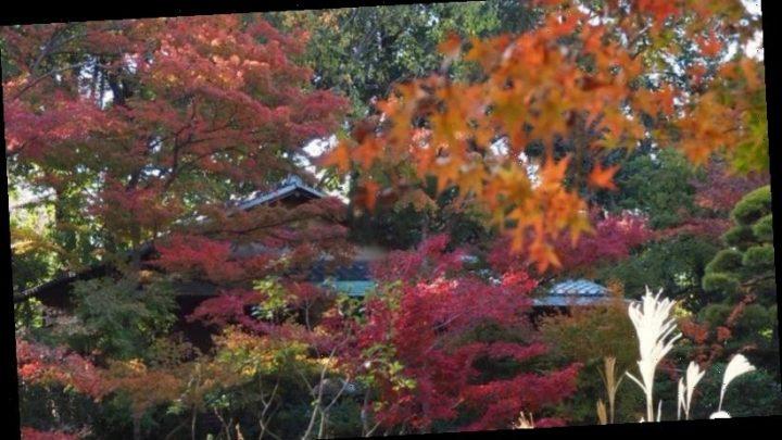 Shun Tokyo's designer shops for the beauty of the Nezu garden.