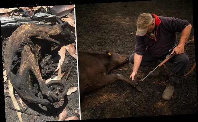 Vets forced to mass euthanase burnt creatures as millions die in fires