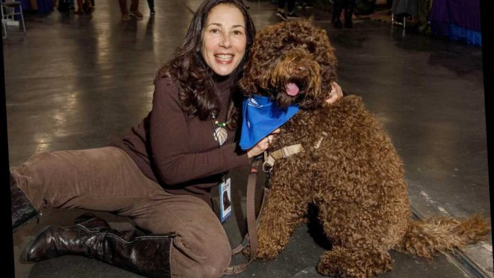Barbet steals the show at American Kennel Club's 'Meet the Breeds'