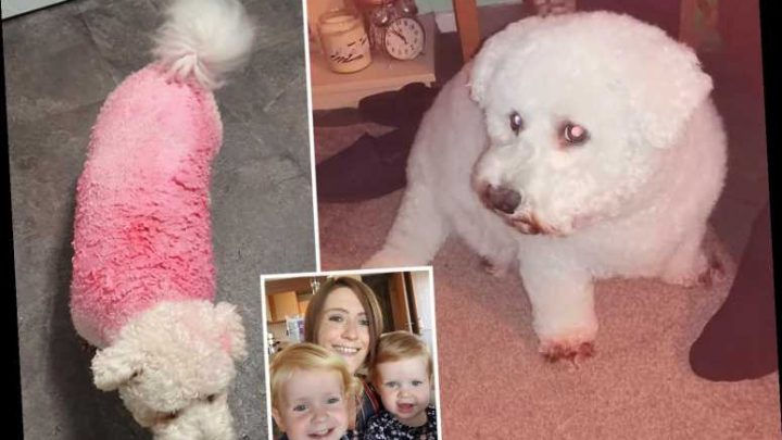 Mum-of-six accidentally dyes her parents' dog bright pink with her kids' paint and can't get it out after TWELVE washes – The Sun