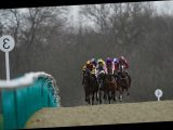 Lingfield races: tips, racecards and preview for the Winter Derby meeting on Saturday