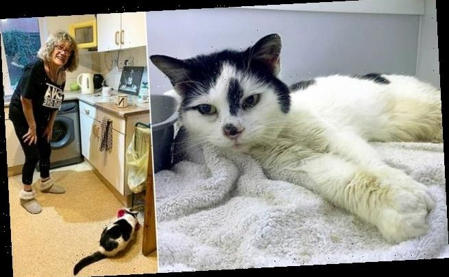 Missy the cat reunited with delighted owner after 11 years