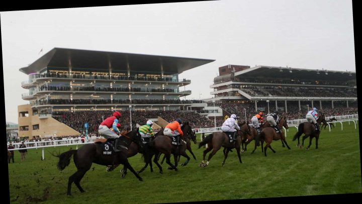 Cheltenham Festival racecard, tips and betting preview for Day 2 of the meeting on Wednesday