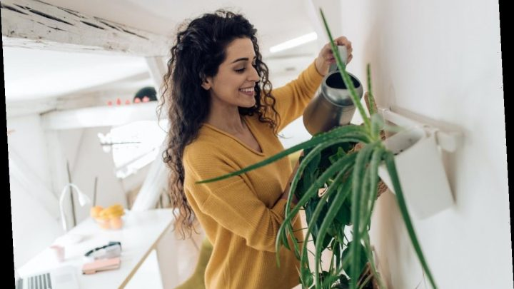 Experts Explain How Keeping Plants Can Help Your Mental Health