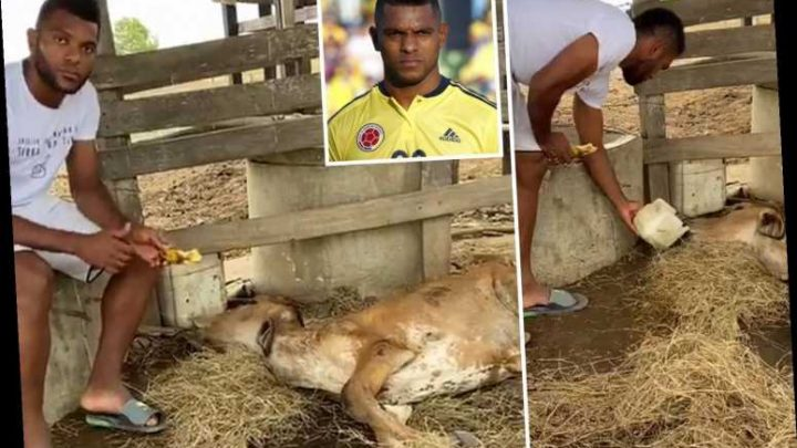 Football star claims drug-crazed gang of young men 'raped and abused' his cow during lockdown – The Sun
