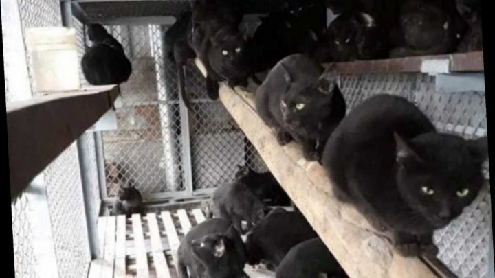 Black cats turned into paste, sold as coronavirus remedy in Vietnam