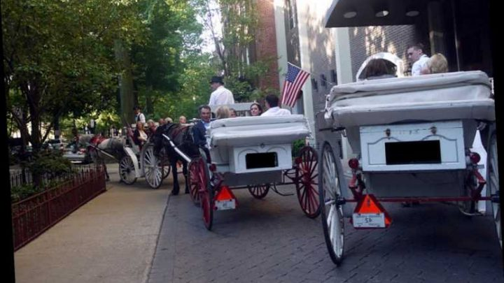 Chicago City Council Votes to Ban Horse-Drawn Carriages