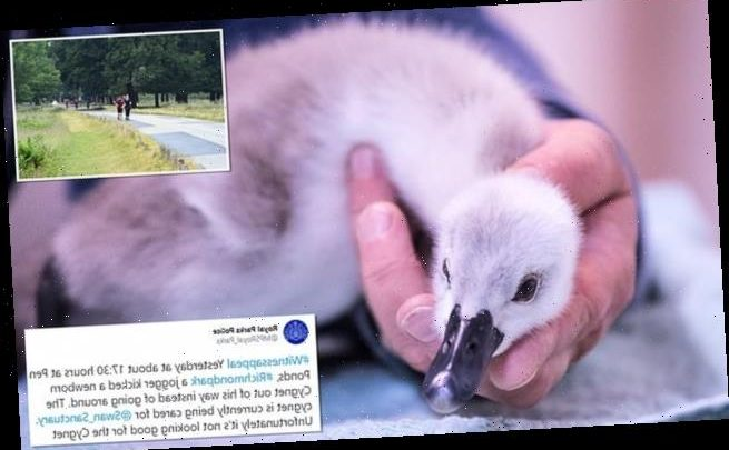Police hunt jogger, 60, who kicked cygnet in the head