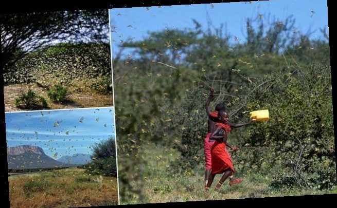 East Africa warned to prepare for an invasion of billions of locusts