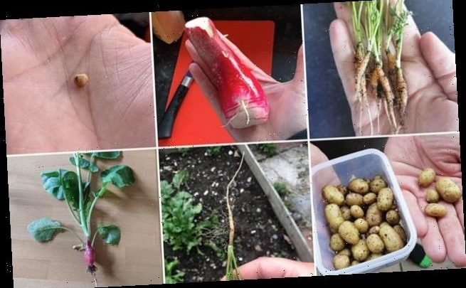 Mother goes viral with hilarious failed attempt at home-grown carrots
