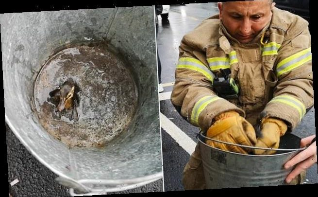 Heartwarming moment firefighters rescue tiny duckling trapped in drain
