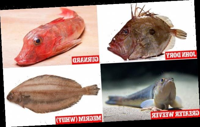 Lockdown Britain gets a taste for its native (but VERY ugly) fish