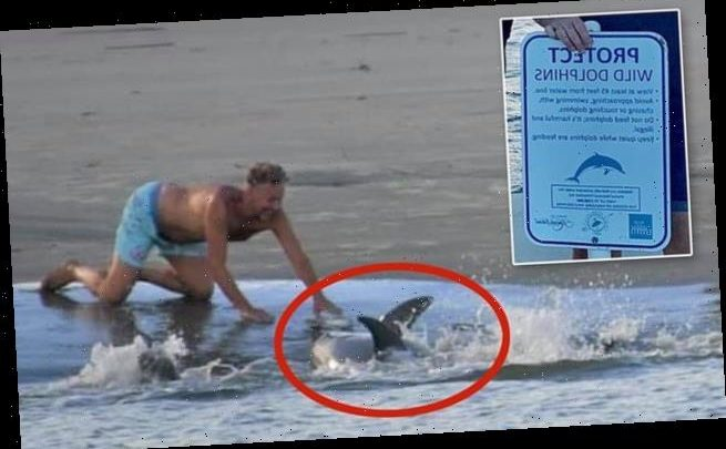 Tourists in South Carolina are harassing 'resident' dolphins that live