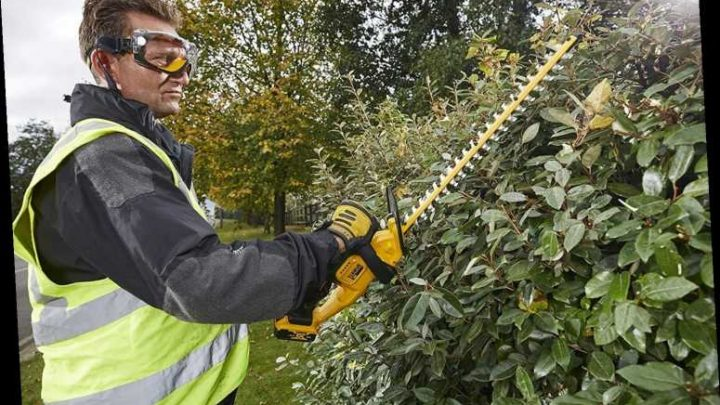 6 Best Hedge Trimmers 2020 | The Sun UK