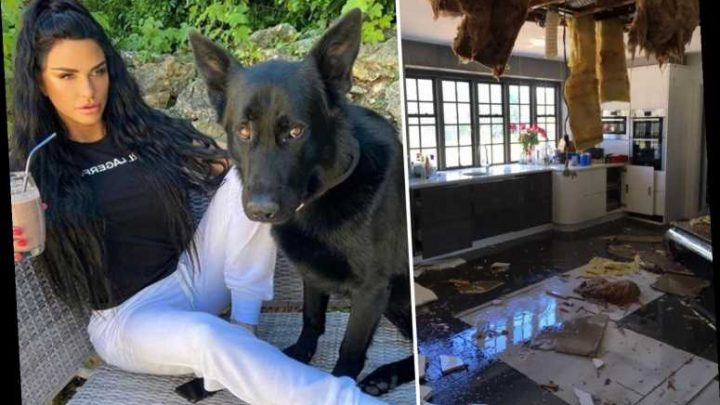 Katie Price says her home has been 'destroyed' two days in a row as she brings in guard dogs
