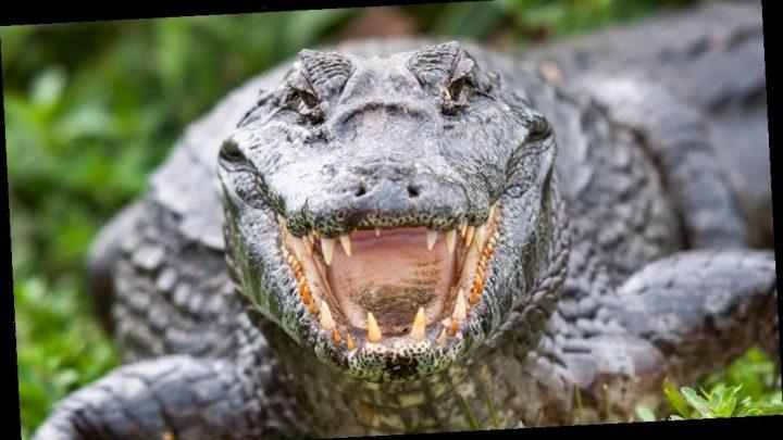 North Carolina man attacked by alligator while kayaking