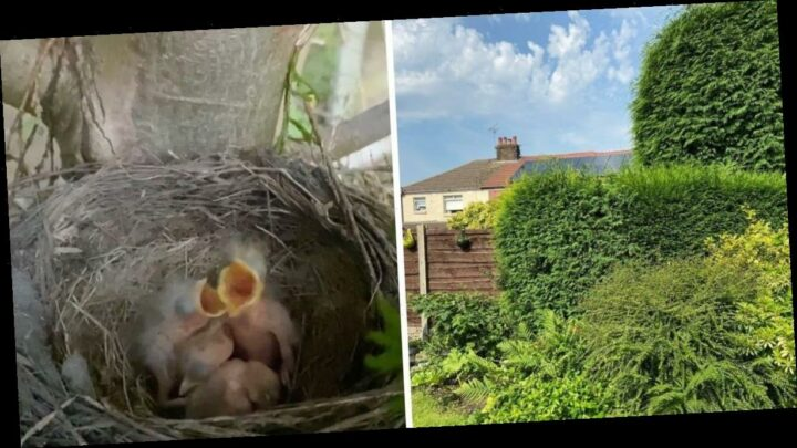 Mum makes adorable discovery while cutting family's overgrown Leylandii tree