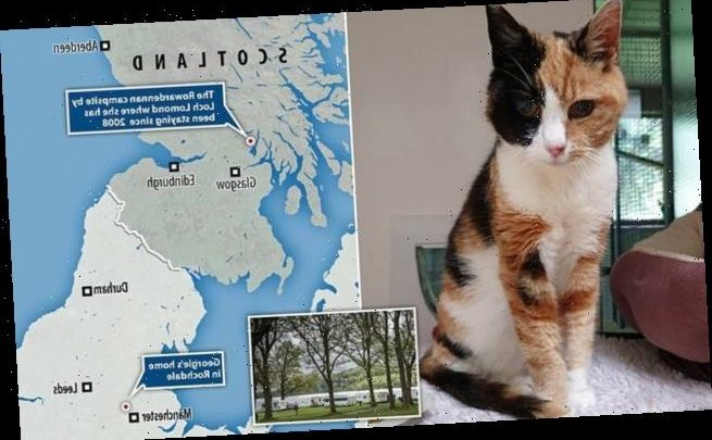 Cat that vanished on Scottish camping holiday found 12 years later