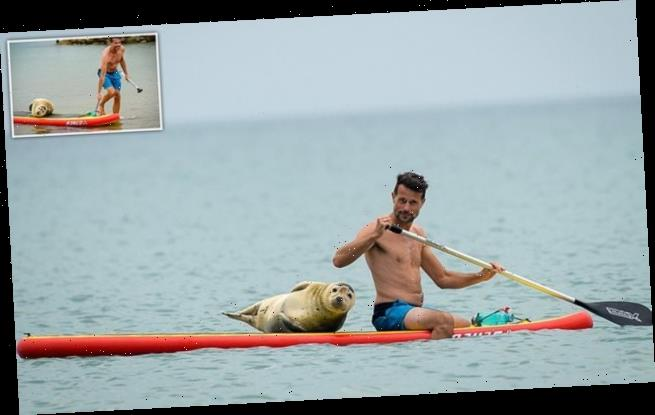 Seal hitches a ride on a stand up paddle board at a Dorset beach