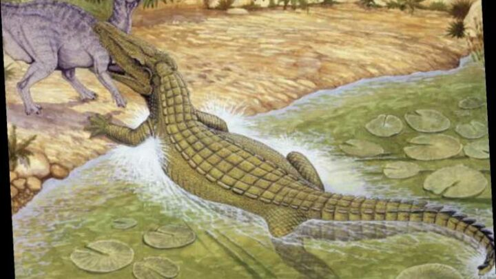 'Terror crocodiles' the size of buses with 'teeth as big as bananas' once preyed on dinosaurs, scientists reveal