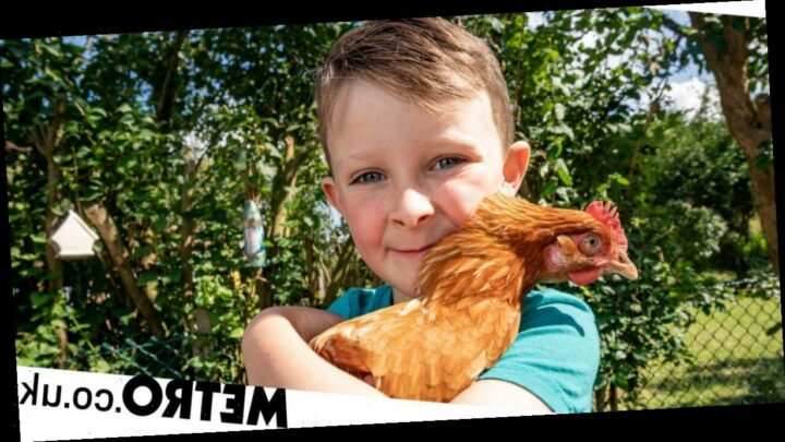 Six-year-old boy meets a chicken at the farm shop and they become best friends