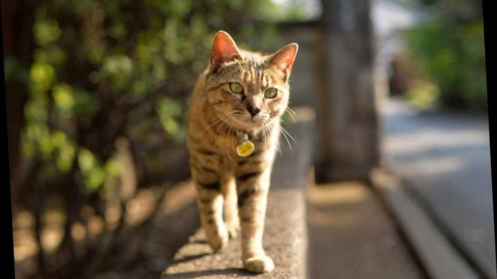 Cat Detained for Smuggling Drugs Escapes Sri Lankan Prison