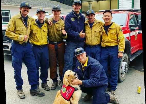 Golden Retriever Therapy Dog Offers Hugs to Firefighters Battling California Wildfires