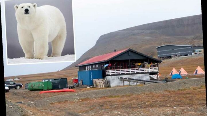 Camper mauled to death by polar bear inside his own tent before animal was later found dead in Norway