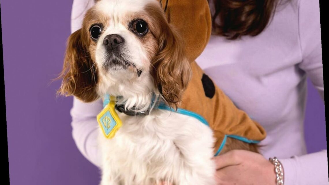 Primark shoppers go wild for this Scooby Doo jacket you can get for you dog