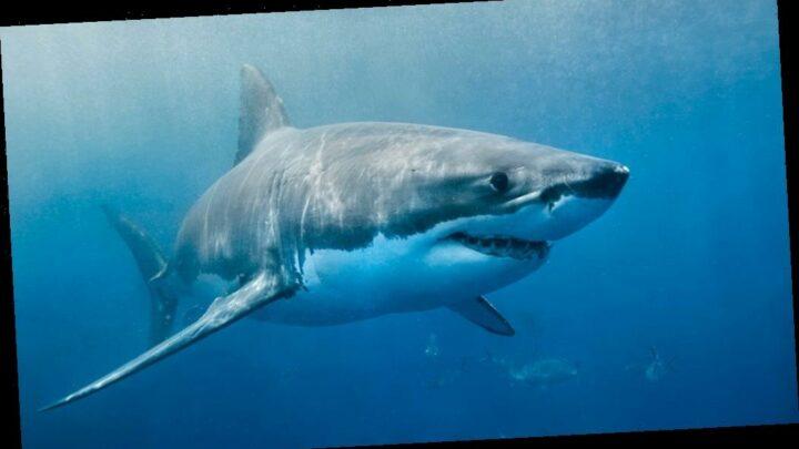 Long Island beaches close amid shark sightings: report