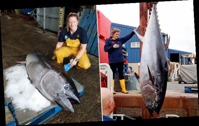 Expensive fish at £2.5million washes up in Chichester West Sussex