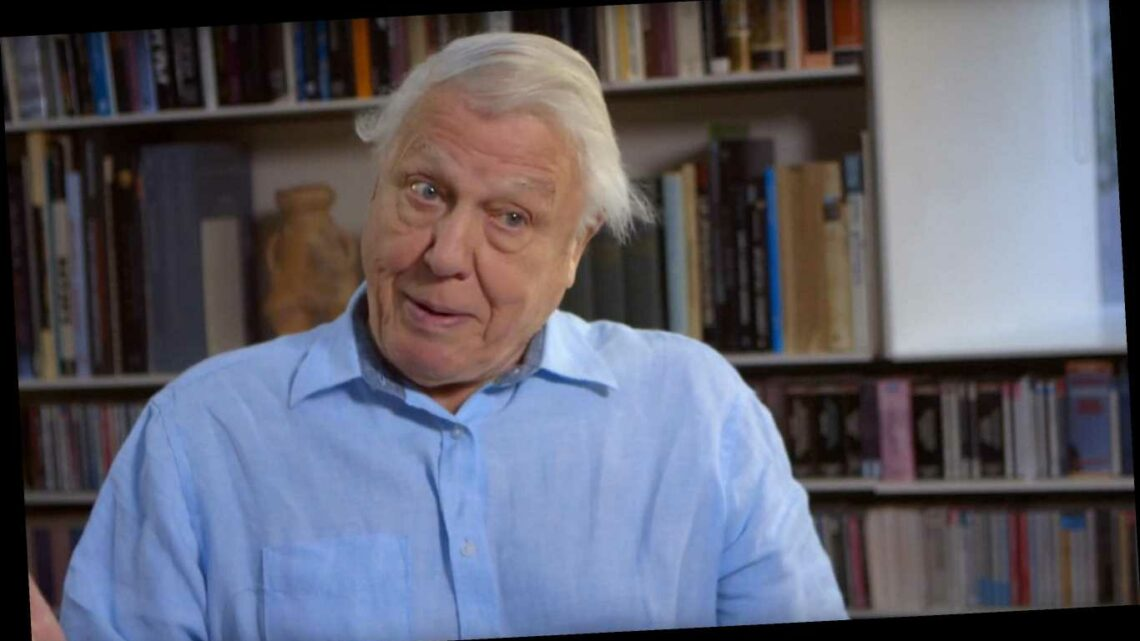 David Attenborough Wins Emmy for Outstanding Narrator