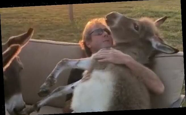 Farmer sings You Are My Sunshine to Ivy the donkey foal
