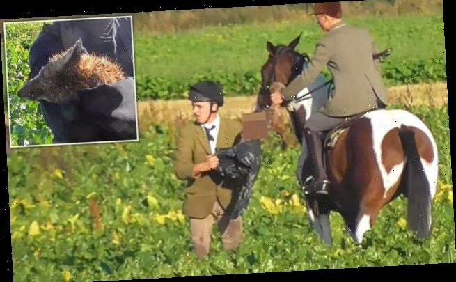 Police probe over footage showing huntsman stuffing dead fox into bag