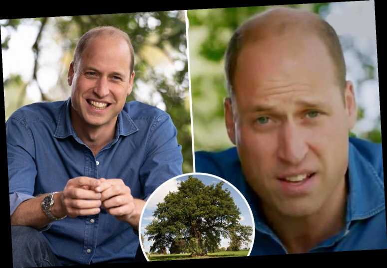 Prince William urges Brits to 'show leadership' and save the planet from base of 1,000-year-old oak tree