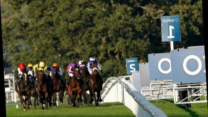Ascot racing tips: Champion Stakes trends – we help you find the winner of the prestigious contest live on ITV