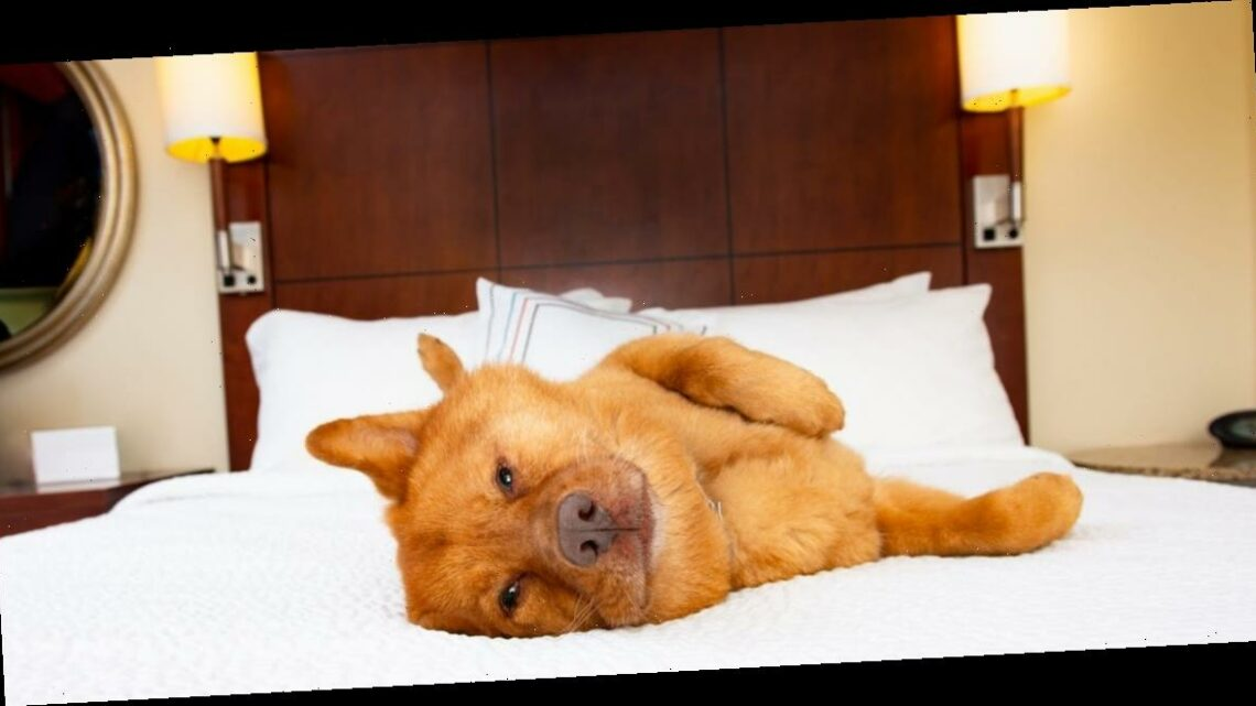 You and your pet could get a job reviewing the world's best pet-friendly hotels for free