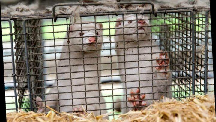 UK blocks travel from Denmark amid fears of new COVID-19 strain in minks