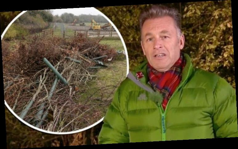 Chris Packham: Autumnwatch host hits out at the destruction of memorial trees