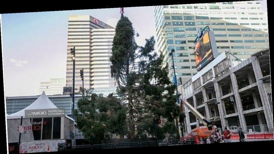 'Pathetic' Christmas tree branded a 'fitting tribute to a miserable 2020'