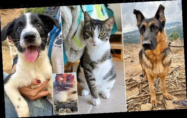 Charity caring for lost pets after Beirut's blast is facing eviction